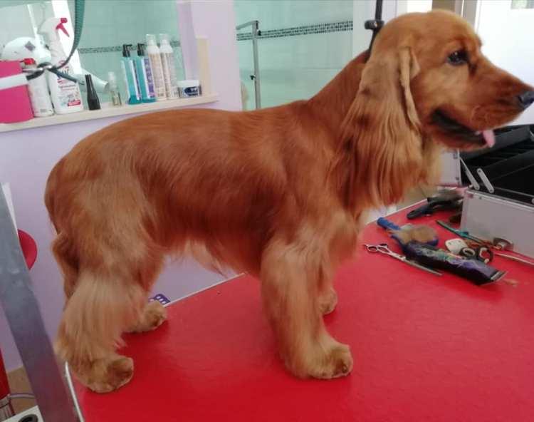 Toelettatura e Spa – Dog Services | Toelettatura | asilo e pensione per cani